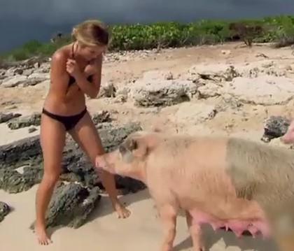 Vidéo : Des prétendantes du Bachelor US attaquées par… des cochons !