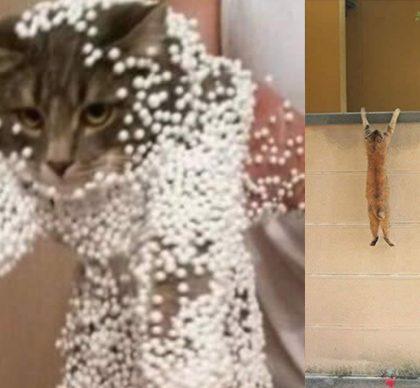 Ces chats savent vraiment comment profiter de la vie